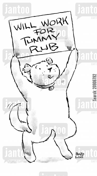 pat the dog cartoon humor: 'Will work for tummy rub.'