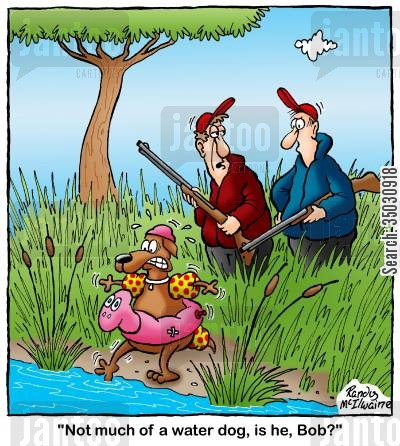 hunting dogs cartoon humor: 'Not much of a water dog, is he, Bob?'