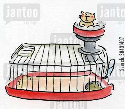 gerbil cartoon humor: Hamster.