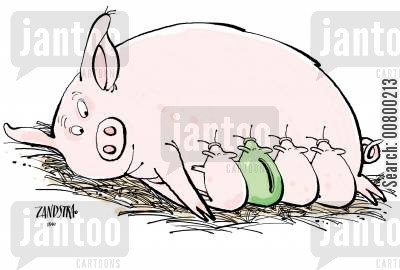 sows cartoon humor: Piggy bank suckling with piglets.