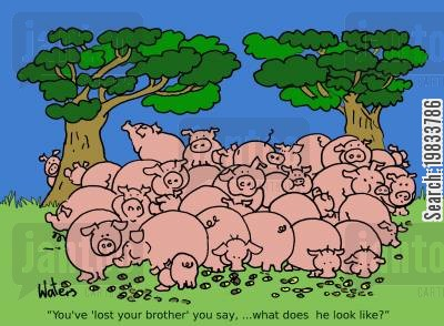 pig sty cartoon humor: 'You've 'lost your brother' you say,... what does he look like?'