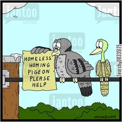homeless pigeons cartoon humor: Homeless Homing Pigeon Please Help.
