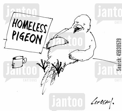 homing pigeons cartoon humor: Homeless Pigeon.