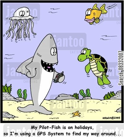 gps system cartoon humor: 'My Pilot-Fish is on holidays, so I'm using a GPS System to find my way around...'
