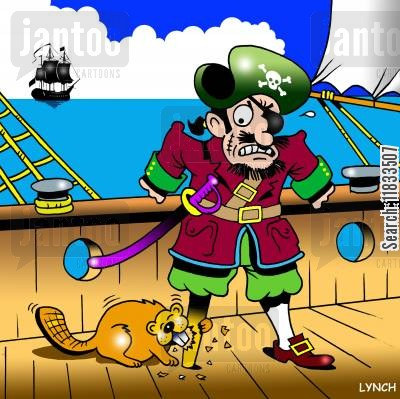 gnawed cartoon humor: Pirate's beaver problems,