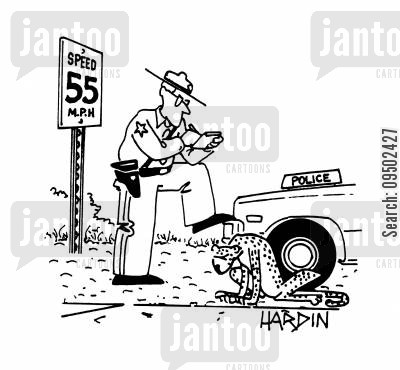 speed laws cartoon humor: Traffic policeman stops cheetah for speeding.