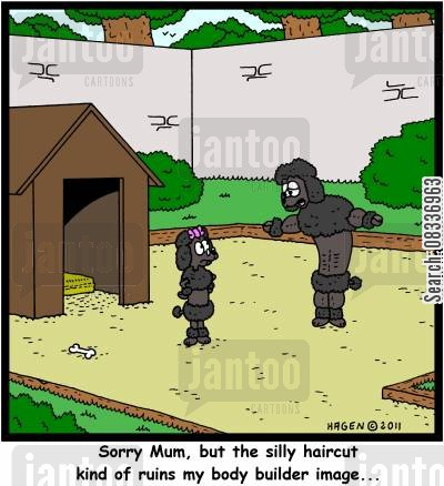 french poodle cartoon humor: 'Sorry Mum, but the silly haircut kind of ruins my body builder image...'