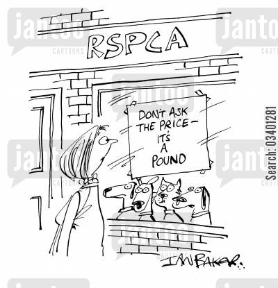 animal shelter cartoon humor: Don't ask the price - it's a pound.