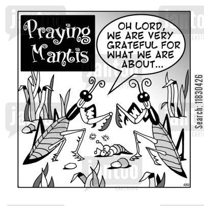 saying grace cartoon humor: Praying Mantis - Oh lord, we are very greatful for what we are about...