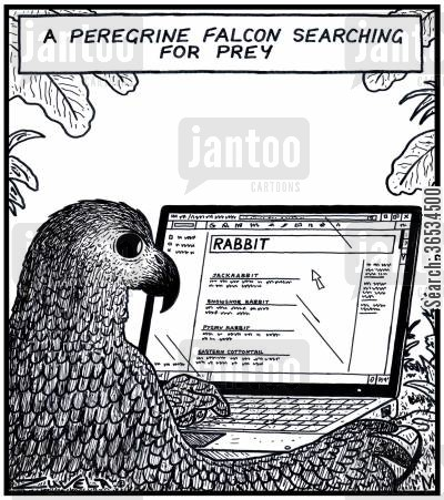 search engines cartoon humor: A Peregrine Falcon searching for prey