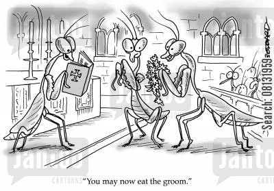 preying mantises cartoon humor: Mantis wedding 'You may now eat the groom.'
