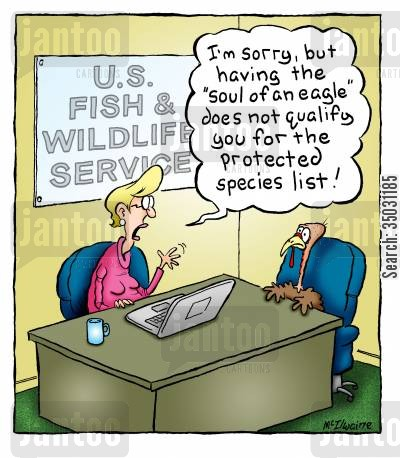 wildlife cartoon humor: 'I'm sorry, but having the 'soul of an eagle' does not qualify you for the protected species list!'