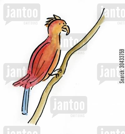 tawny cartoon humor: Parrot