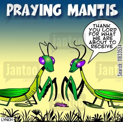 saying prays cartoon humor: Praying mantis.