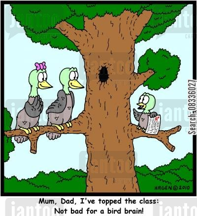 top marks cartoon humor: 'Mum, Dad, I've topped the class: Not bad for a bird brain!'