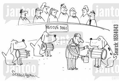 dog show judge cartoon humor: Rescue Dogs.