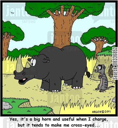 ophthalmologist cartoon humor: 'Yes, it's a big horn and useful when I charge, but it tends to make me cross-eyed...'