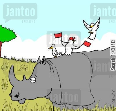 landing crew cartoon humor: Birds landing on a Rhino