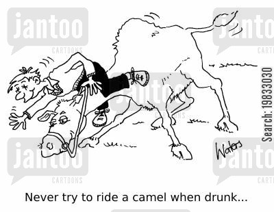 drunk drivers cartoon humor: Never try to ride a camel while drunk...
