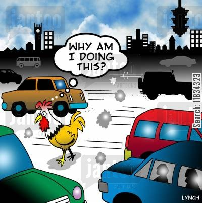 chicken crosses the road cartoon humor: Chicken crosses the road: 'Why am I doing this?'