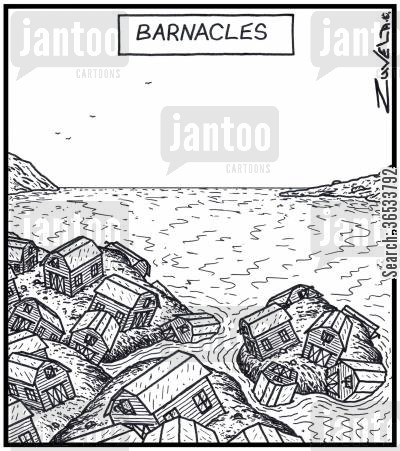 attached cartoon humor: Barnacles Rock Barnacles in the form of farm Barns.