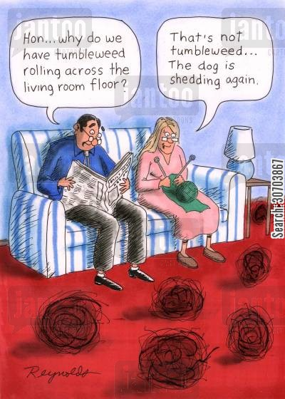 living rooms cartoon humor: 'Hon...Why do we have tumbleweed rolling across the living room floor?' 'That's not tumbleweed...The dog is shedding again.'