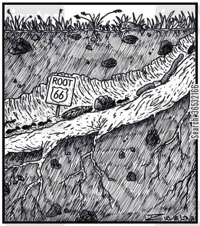 route 66 cartoon humor: Root 66.