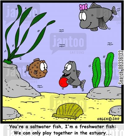 saltwater fish cartoon humor: 'You're a saltwater fish, I'm a freshwater fish: We can only play together in the estuary...'