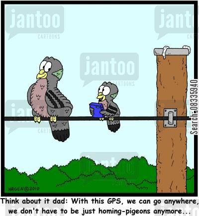 sat nav cartoon humor: 'Think about it dad: With this GPS, we can go anywhere, we don't have to be just homing-pigeons anymore...'