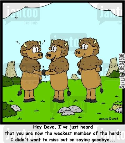 bison cartoon humor: 'Hey Dave, I've just heard that you are now the weakest member of the herd: I didn't want to miss out on saying goodbye...'