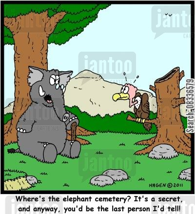 elephant cemetery cartoon humor: 'Where's the elephant cemetery? It's a secret, and anyway, you'd be the last person I'd tell!'