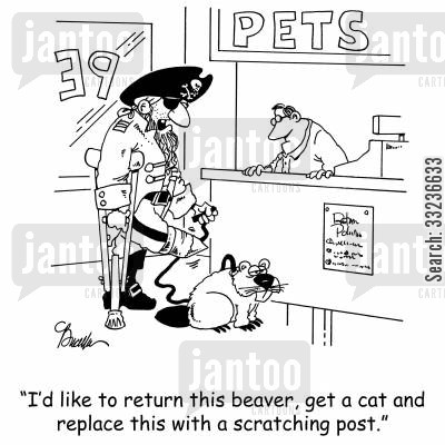 pet accessory cartoon humor: 'I'd like to return this beaver, get a cat and replace this with a scratching post.'