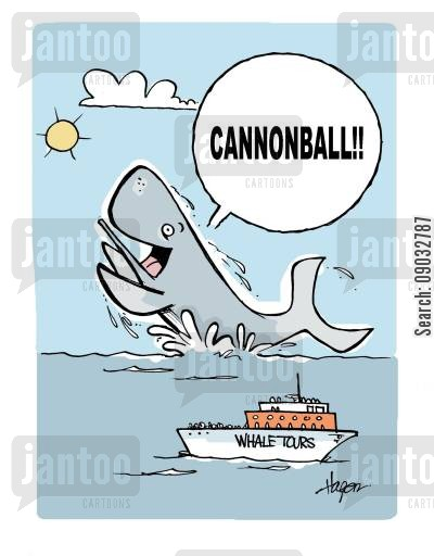 divebomb cartoon humor: 'CANNONBALL!!' - Whale tours.