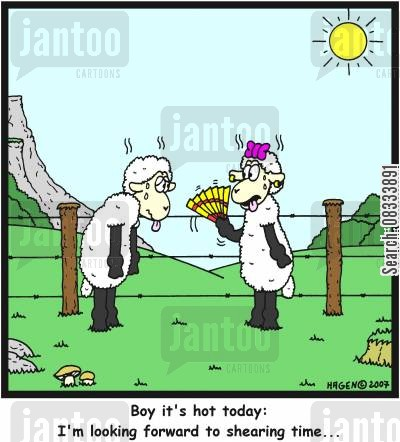 hot summer cartoon humor: 'Boy it's hot today: I'm looking forward to shearing time...'