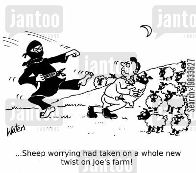 sheep farming cartoon humor: ...Sheep worrying had taken on a whole new meaning on Joe's farm!