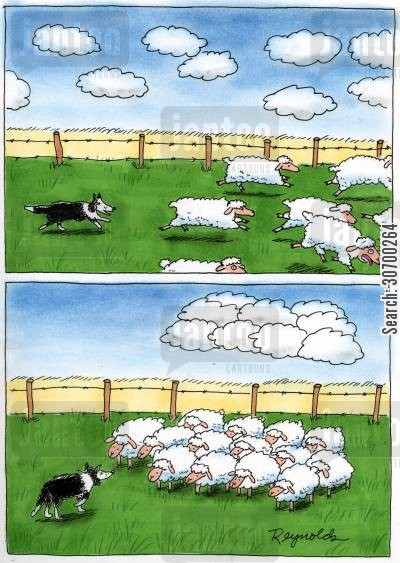 sheep dogs cartoon humor: Sheep gang up on the sheep dog.