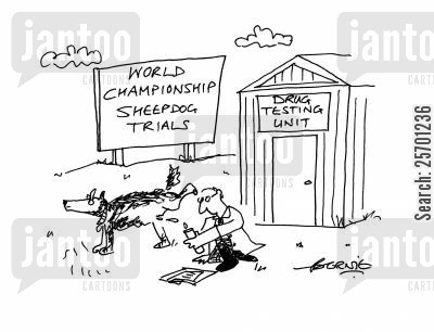 sheepdog trial cartoon humor: World Championship Sheepdog Trials.