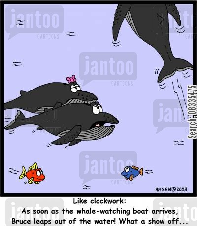 centre of attention cartoon humor: 'Like clockwork: As soon as the whale-watching boat arrives, Bruce leaps out of the water! What a show off...'