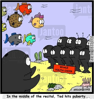 choristers cartoon humor: In the middle of the recital, Ted hits puberty...