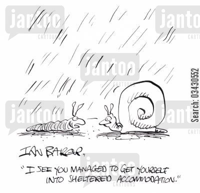 accommodation cartoon humor: 'I see you managed to get yourself into sheltered accommodation'