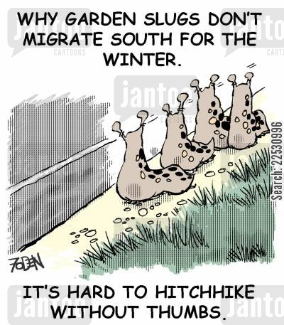 hitchhiker cartoon humor: Why garden slugs don't migrate south for the winter.