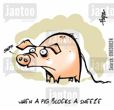 sicky cartoon humor: When a pig blocks a sneeze.