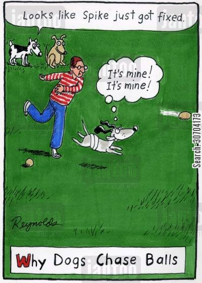 chasing balls cartoon humor: 'Looks like Spike just got fixed.' Why Dogs Chase Balls.
