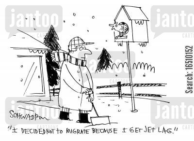 jet lag cartoon humor: 'I decided not to migrate because I get jet lag.'