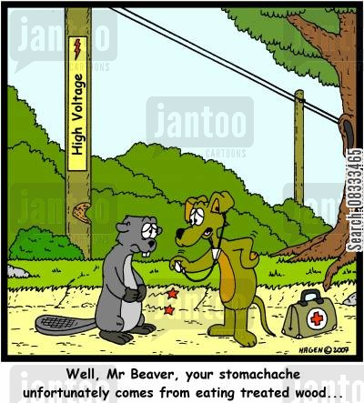 stomachache cartoon humor: 'Well Mr Beaver, your stomachache unfortunately comes from eating treated wood...'