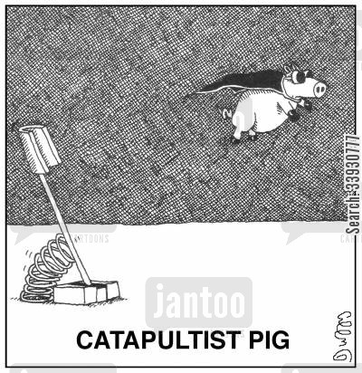 flying pig cartoon humor: Catapultist Pig.