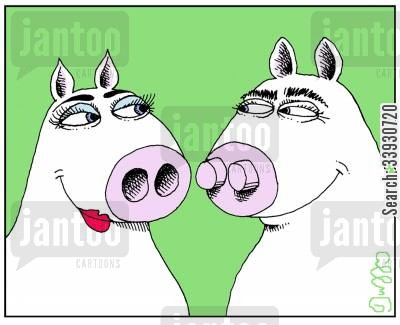 snout cartoon humor: Convexconcave pigs.