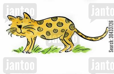 snow leopard cartoon humor: Leopard