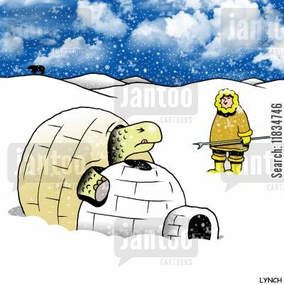 mistaken identities cartoon humor: A tortoise tries to mate with an igloo.