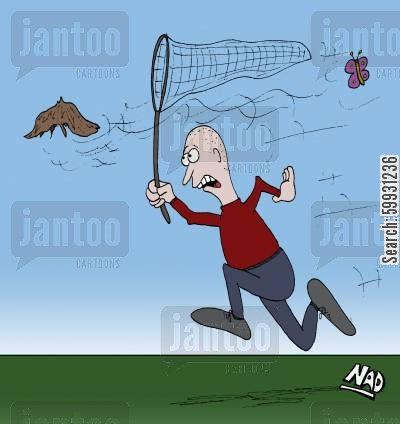 butterfly catching cartoon humor: A bald man is chasing his toupee with a butterfly net